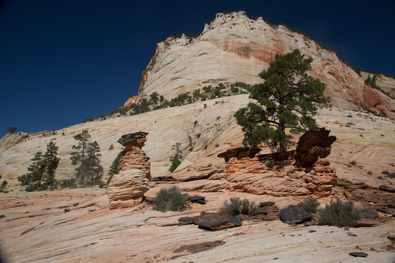 Tree growing out of a hoodoo in Zion.