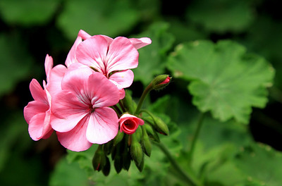 Beþparmak daglarindan vahsi çiçekler !
