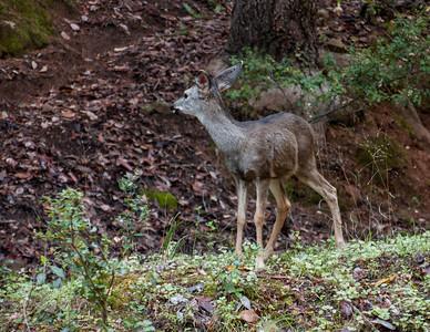 Uvas Canyon Park Ca