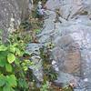 Sandy Bottom Overlook flora