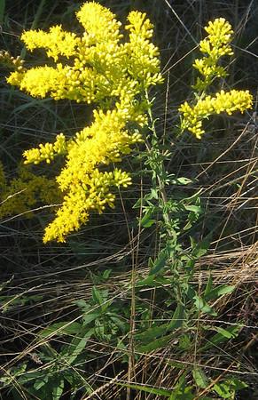 Plants at Blandy