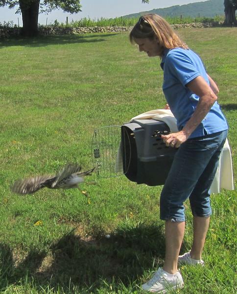 Belinda Burwell releases Coopers Hawk