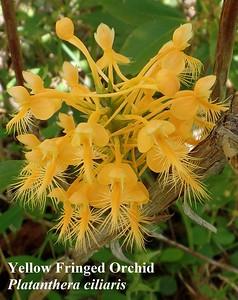 VNPS Mountain Lake Biological Station Field Trip 07/30-08/02/2015