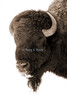 bison8x12