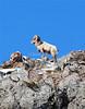 goat030307