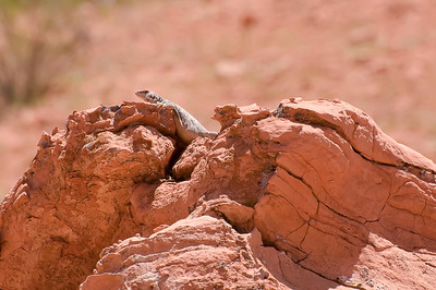 Valley of Fire April 24, 2010 #14-Edit