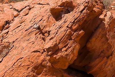 Valley of Fire April 24, 2010 #08-Edit