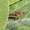 Differential Grasshopper, DeKorte, Aug 2017