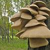 Tree shroom