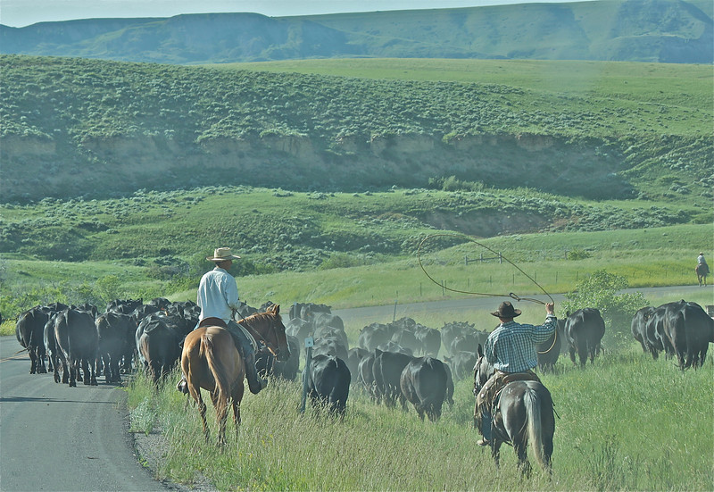 Pryor Montana Cowboys