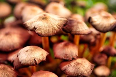 Mushroom-Brown