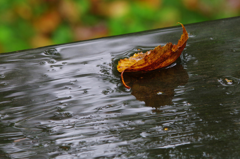 Lonely leaf on a rainy fall afternoon