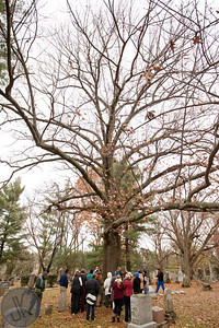 Venerable trees of the Lexington Cemetery - November 23, 2013