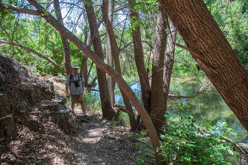 Verde River at Headwaters, 6/16/15