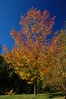 Foliage 2006 (112)