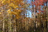 Foliage 2006 (153)
