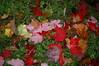 Foliage 2006 (69)