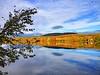 LakeArrowhead_Foliage