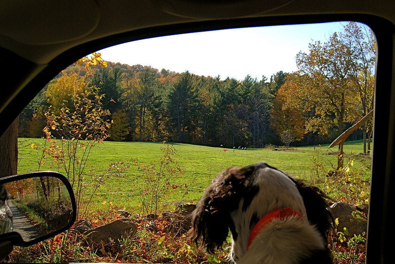 A Dog's View