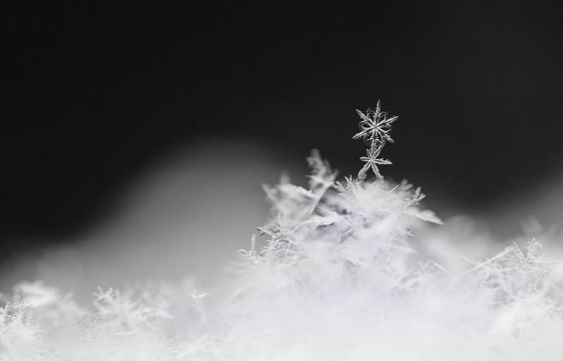 dancing snowflakes 1