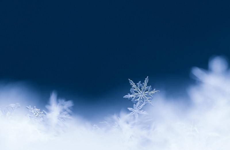 resting snowflake