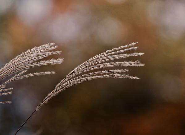 Tassles In The wind