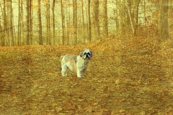 Zoe in the woods (screen overlay)
