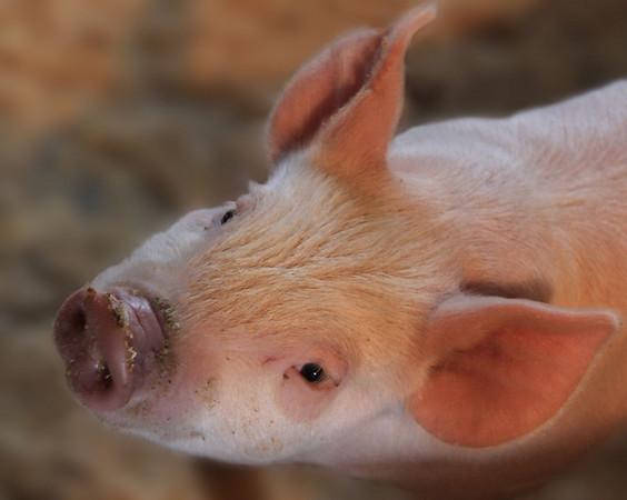 Little Wilbur  Image By J. Ogilvie