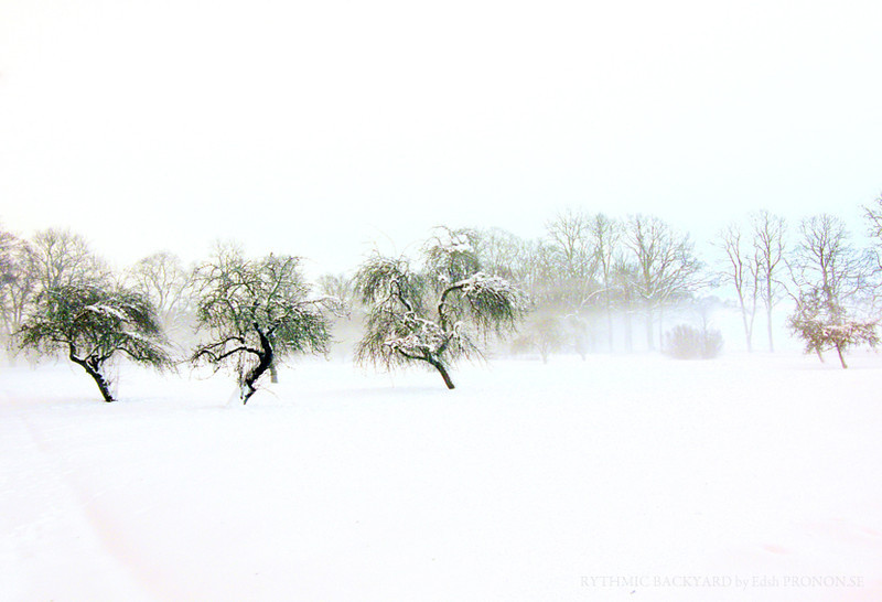"""Rythmic backyard""  <i>- Dancing though the meadows of snow</i>"