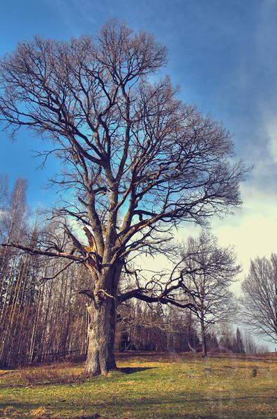 """Seasonal Vibrance""  <i>- A majestic creation of nature in a vibranced seasonal shift</i>"