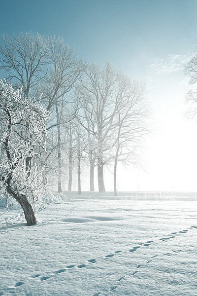 """""""Winter in my backyard""""  <i>- A splendid and sunny winter day and the place was layered by fog</i>"""