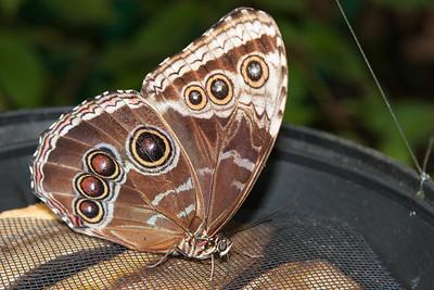 Victoria Butterfly Gardens