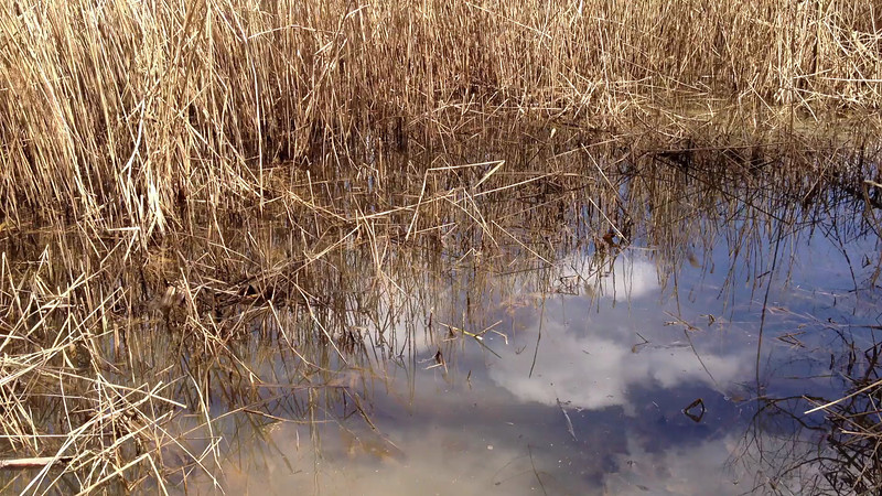 Frog Chorus.<br /> Spring Equinox 2013<br /> Vernal Pond, Oregon Ridge Park.