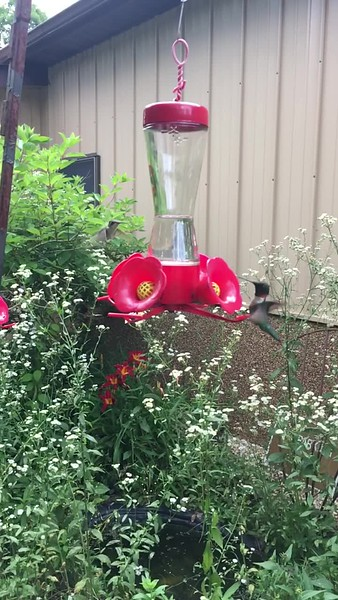 Watch hummingbirds in slow motion.