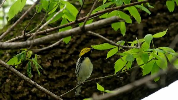 Close-up Birds at Magee Marsh