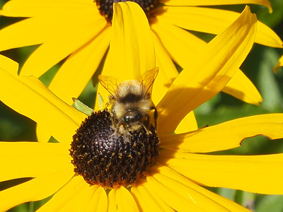 Bee or not (to) Bee - August 2017