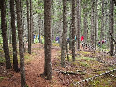 Maine Wildlife and Nature