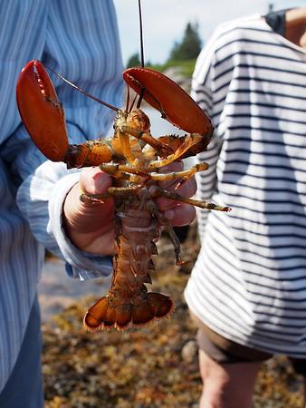 Lobster Walk - August 2015