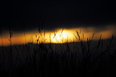 Strån i solnedgången