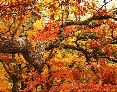VA Fall Colors
