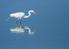 Great Egret<br /> Great Egret