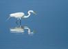 Great Egret<br /> Great Egret