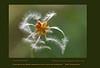 """Autumn spiral Espiral de otoño <a href=""""http://anaretamero.blogspot.com/2009/10/first-prize-in-flora-category-espiral.html""""> Más información/ More information</a>"""