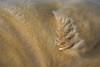 """<span style=""""color:#FBEC5D"""">Garra</span>   Las aparentemente amenazadoras uñas en su garra, muestran el contraste entre esas exiguas armas y la suavidad de muñeco de peluche del pelaje de la cría de la foca gris. En los fríos días de Diciembre, en las costas británicas, todos los años tiene lugar el alumbramiento de numerosas focas grises. Éstas dormitan sobre la arena, conservando en muchas ocasiones el cordón umbilical y con una característica y suave piel blanco crema que ha sido atracción de peleteros. Su inocente indefensión cautiva a cualquiera que la observe en esas inhóspitas playas.  Nikon D200, Nikkor 80-400, F/5.6, 1/500, ISO 125  Finalista en el Concurso Fotográfico de Naturaleza <em>Asferico</span></em>2010 (Italia)."""