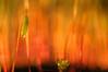 Musgos en llamas