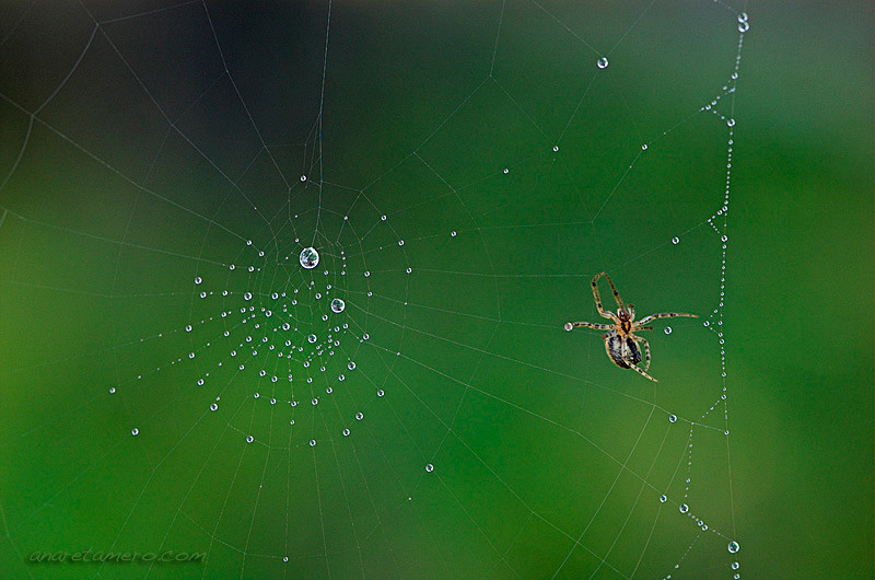 Cleaning the web
