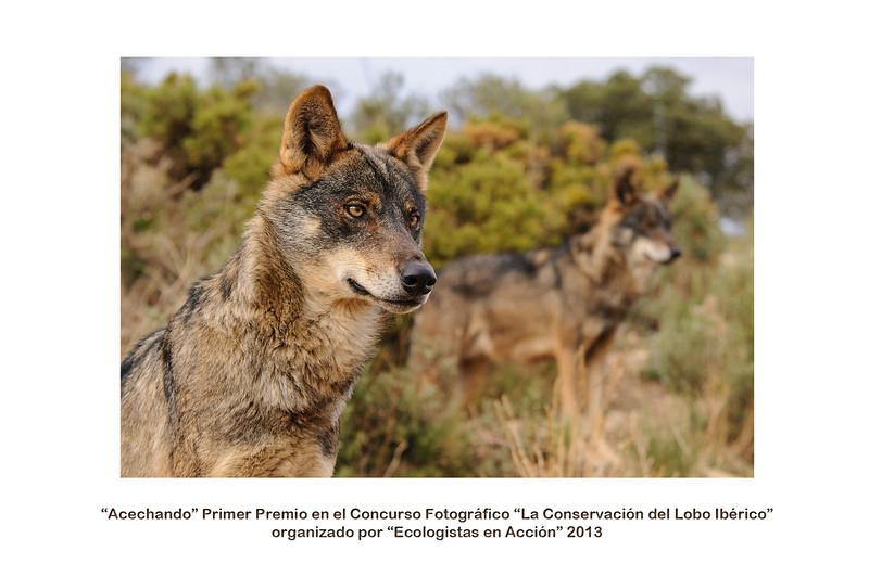 """Foto tomada en parque con animales en semilibertad  <a href=""""http://www.ecologistasenaccion.org/article26426.html"""">Enlace a """"Ecologistas en acción""""</a>"""