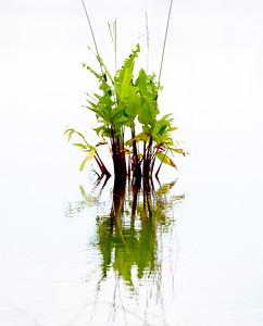 Swamp flora