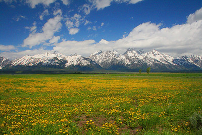 Teton Mountains near Jackson, Wyoming