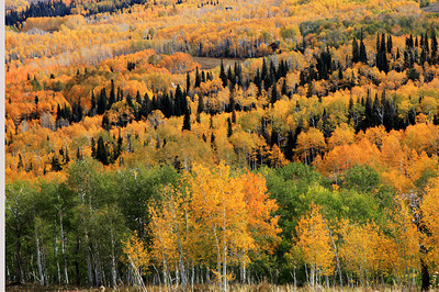 Fall Aspens On The Energy Loop Near Helper, Utah